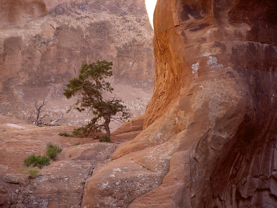 Tree Photograph - Hidden Curves Of Arches by Ramie Liddle
