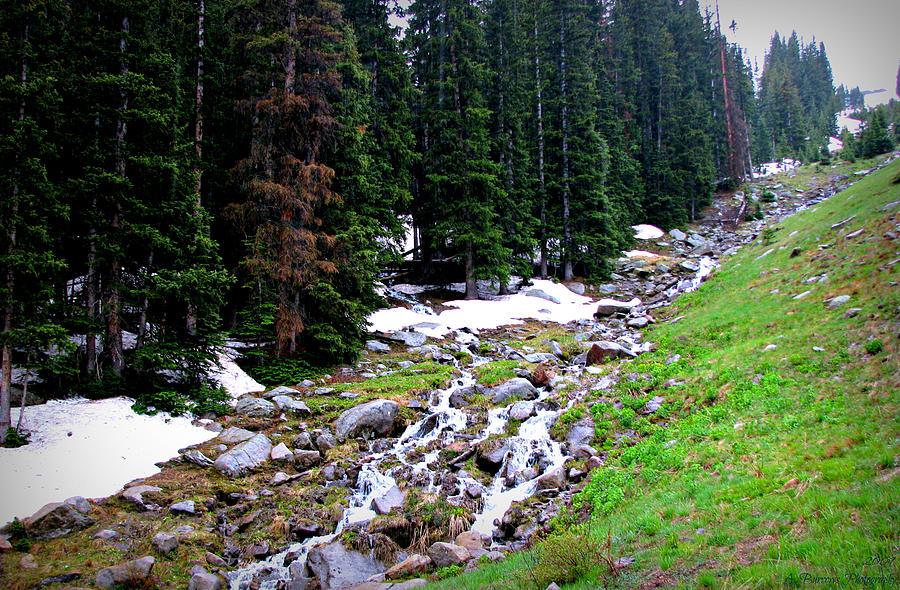 Rocky Mountain National Park Photograph - Hidden Valley Creek  by Aaron Burrows