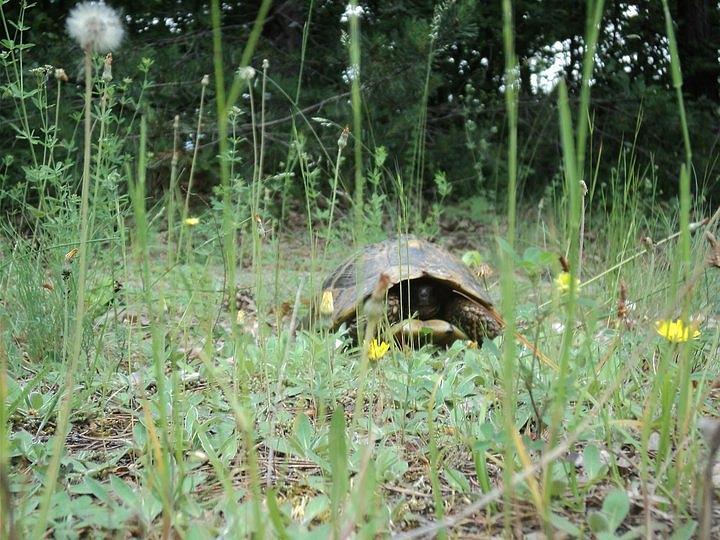 Turtle Photograph - Hide And Seek by Saska V