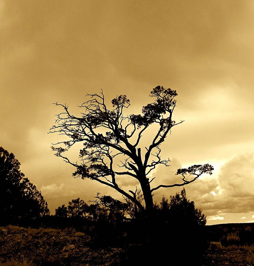 Evening Photograph - High Country Tree by FeVa  Fotos