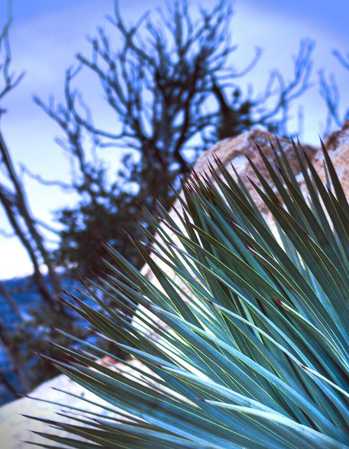 High Desert Photograph - High Desert Cactus by Jeffery Reynolds