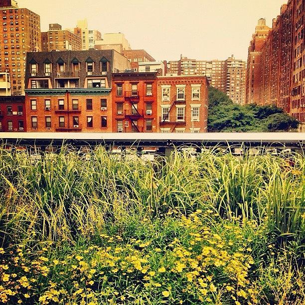 New York City Photograph - High Line Wildflowers by Vivienne Gucwa