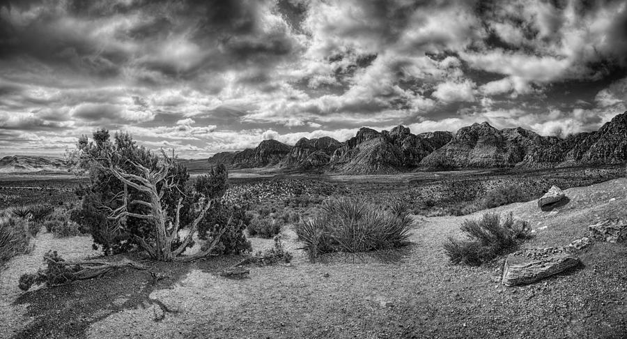 Yucca Plants Photograph - High Point Monochrome by Stephen Campbell