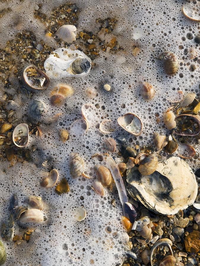 Strandline Photograph - High Tide Line by Adrian Bicker