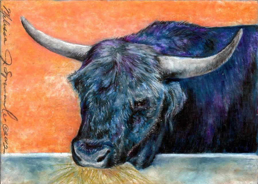 Bull Drawing - Highlander Bull by Melissa J Szymanski