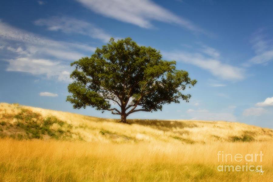 Tree Photograph - Hill Top Beauty by Scott Pellegrin