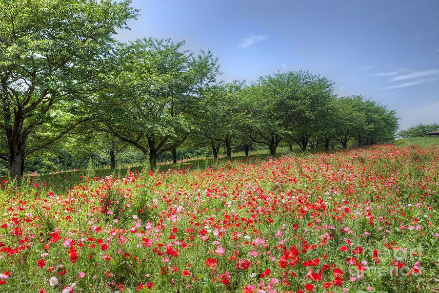 Nature Photograph - Hill Where A Poppy Bloom by Tad Kanazaki
