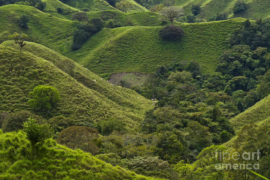 Central America Photograph - Hills Of Caizan 2 by Heiko Koehrer-Wagner