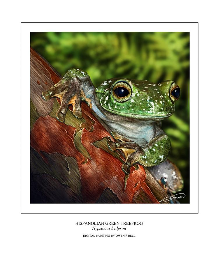 Frog Digital Art - Hispanolian Green Treefrog by Owen Bell