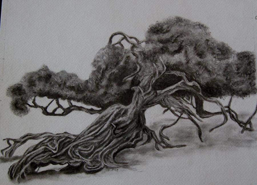 Tree Drawing - Hobbit Tree by Joan Pye
