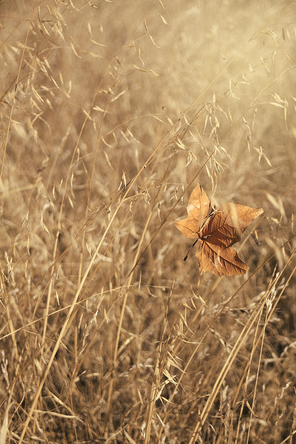 Leaf Photograph - Hold Me Tenderly by Laurie Search