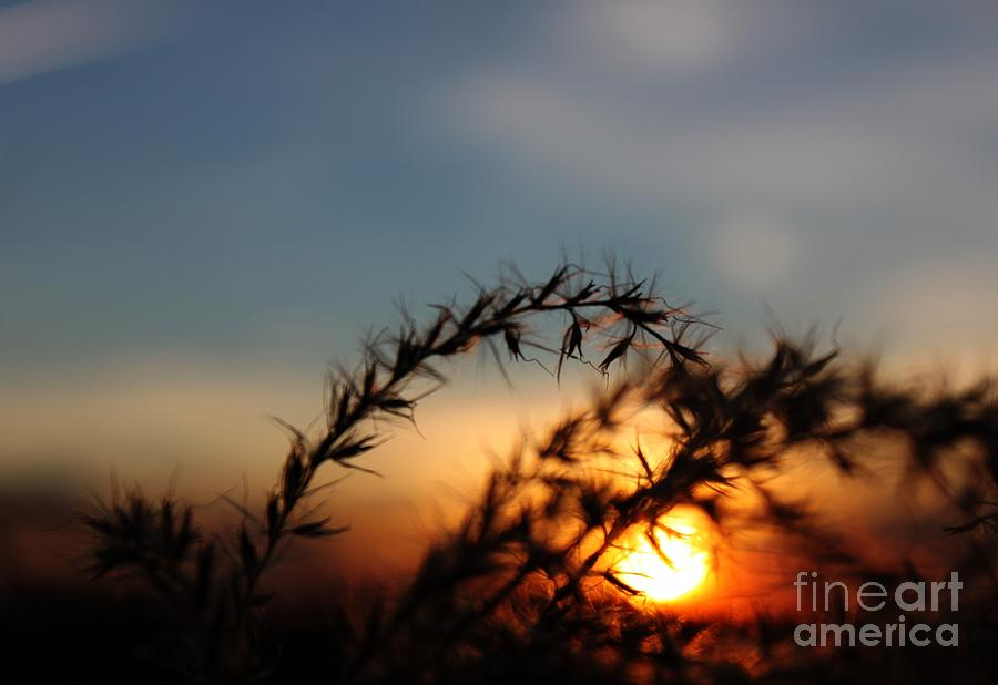 Grass Photograph - Hold On To The Sun by Erica Hanel