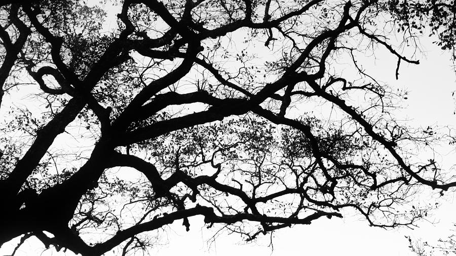 Tree Photograph - Holding The Sky by Vera Rodrigues