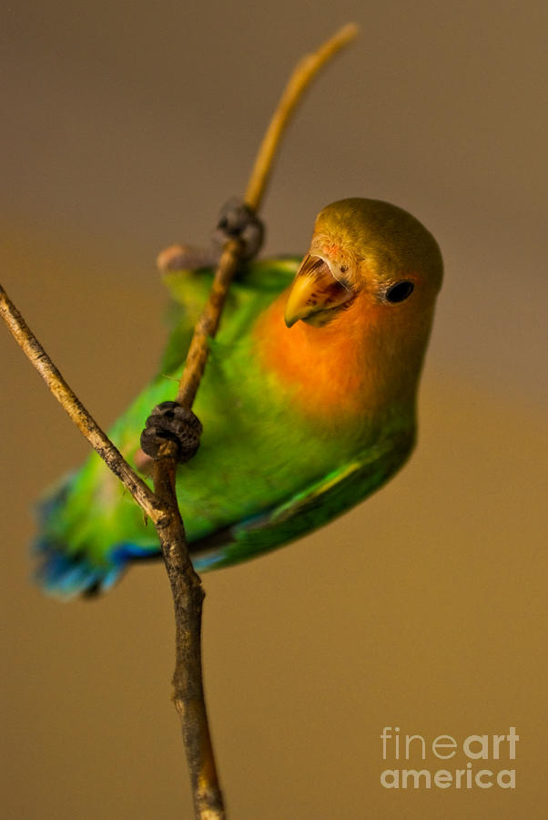Love Bird Photograph - Holding Tight by Syed Aqueel
