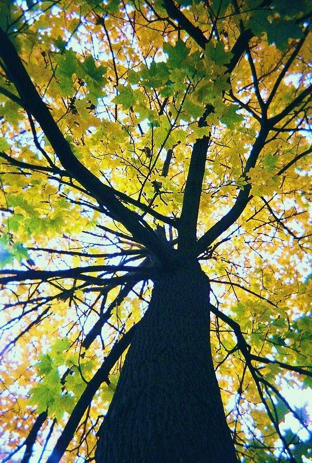Tree Photograph - Homage To Georgia Okeefe by Todd Sherlock