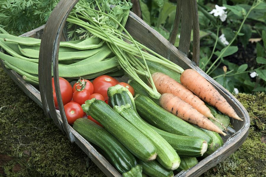 Carrot Photograph - Home-grown Organic Vegetables by Sheila Terry