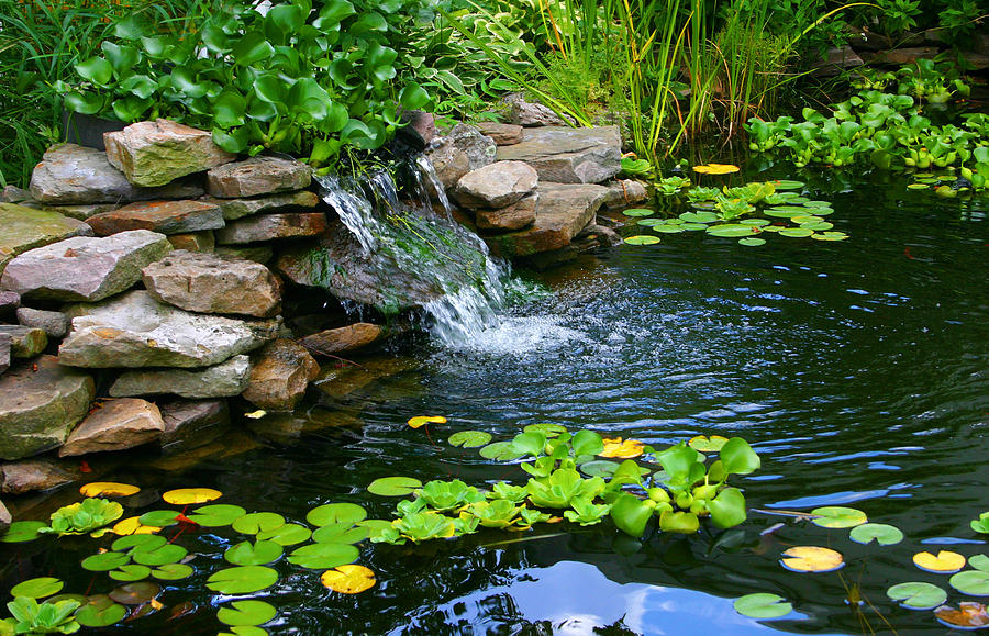 Homemade Pond Landscape Photograph By Cindy Haggerty