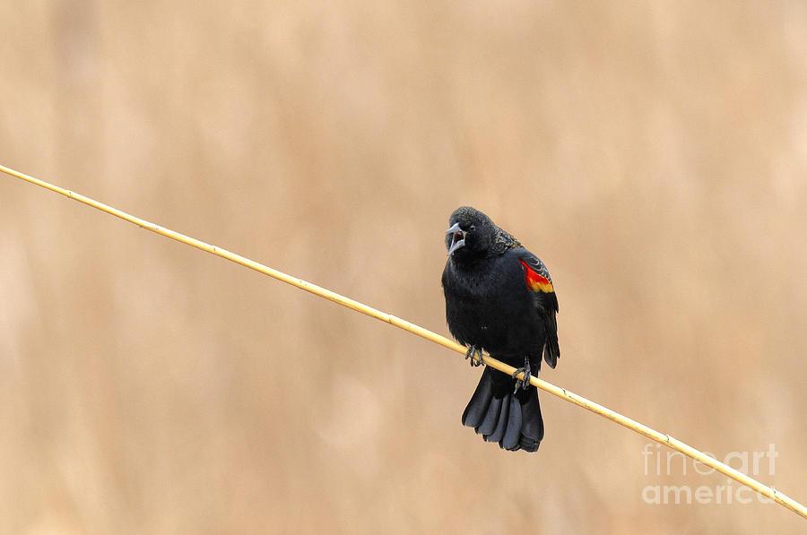 Birds Photograph - Honey Hunting by Dennis Hammer
