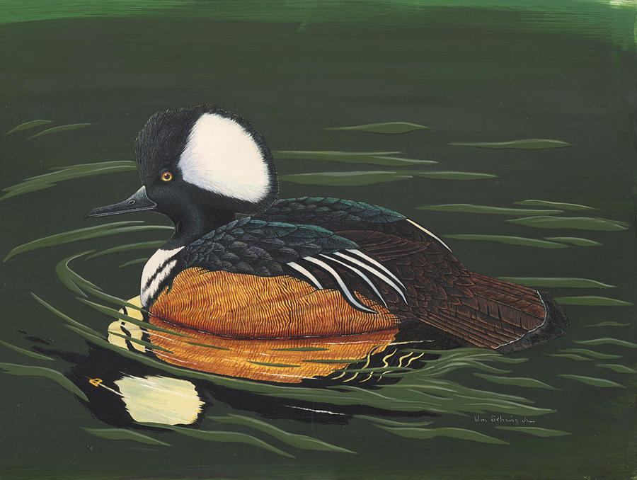 Duck Painting - Hooded Merganser by Bill Gehring