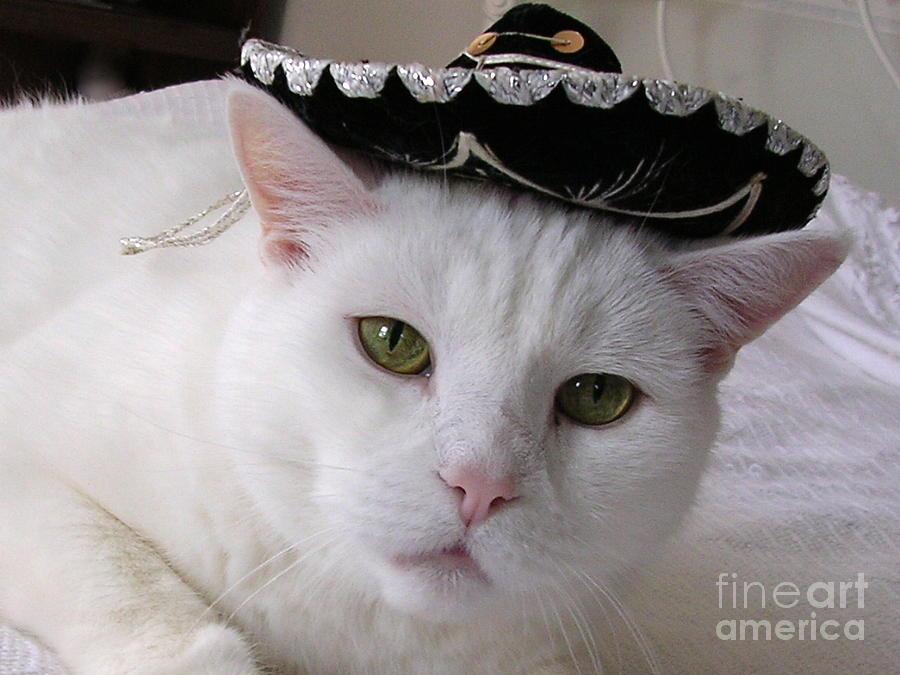 Cat With Sombrero Photograph - Hooray For Cinco De Mayo by Byron Varvarigos
