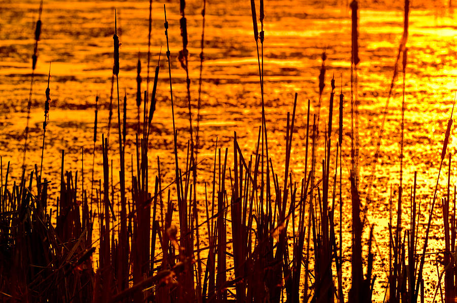 Horicon Photograph - Horicon Cattail Marsh Wisconsin by Steve Gadomski