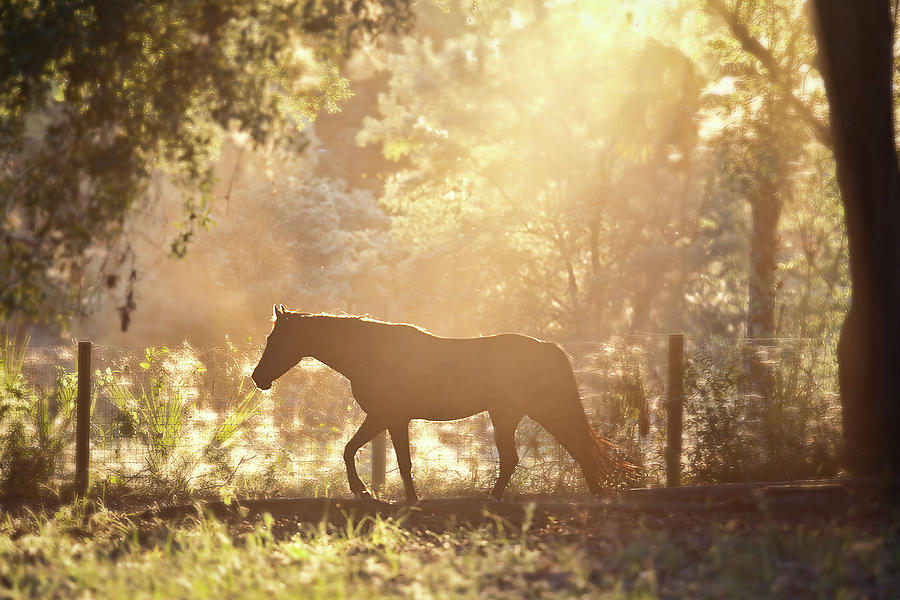 Horizontal Photograph - Horse Backlit At Sunset by Seth Christie