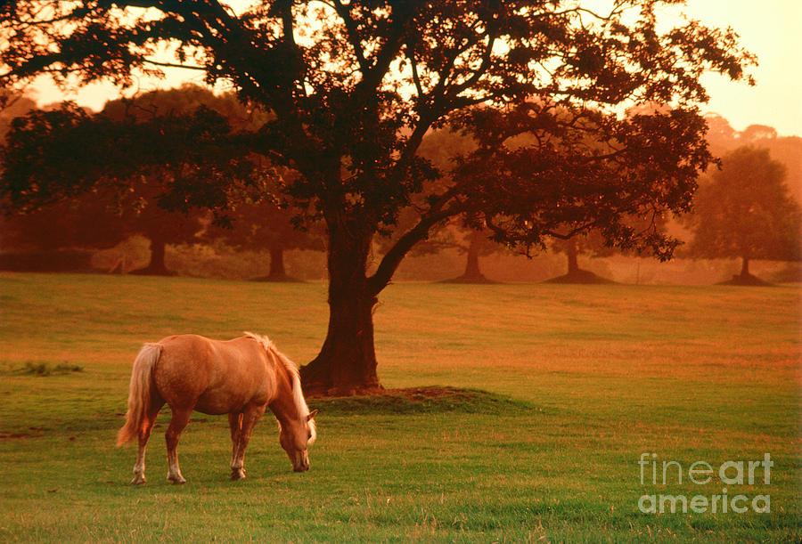 Horse Photograph - Horse by Carl Purcell and Photo Researchers