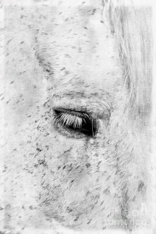 Animal Photograph - Horse Eye by Darren Fisher