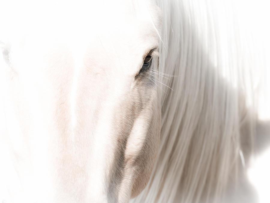 White Horse Photograph - Horse Glow by Toni Thomas