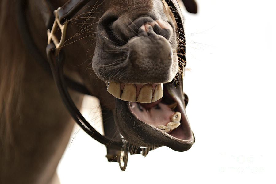 Horse Mouth Photograph - Horse Humour by Heather Swan