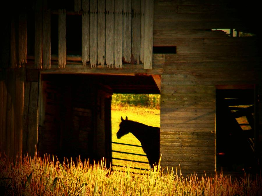 Indiana Photograph - Horse In The Barn by Joyce Kimble Smith