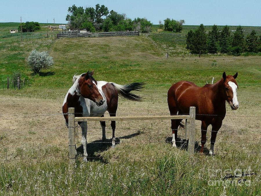 Brown Horse Photograph - Horse On A Warm Day by Bobbylee Farrier