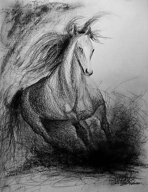 Horse Drawing - Horse  by Shankhadeep Bhattacharya