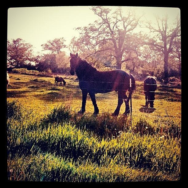 Beautiful Photograph - #horse #sunshine #silhouette #sunrise by Bryan P
