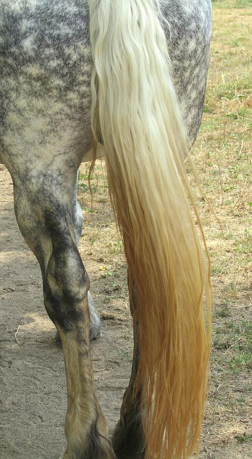 Horse Tail Photograph - Horse-tale by Todd Sherlock
