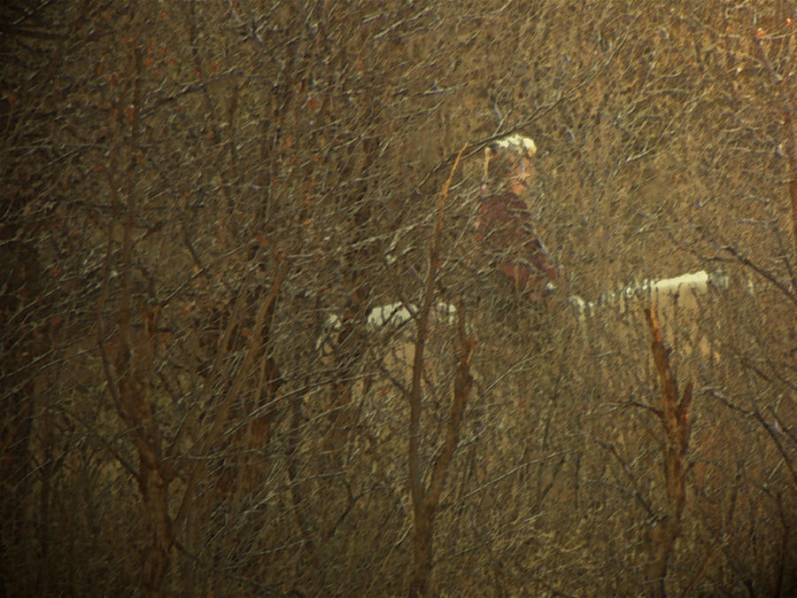 Abstract Photograph - Horseback In The Garden by Lenore Senior