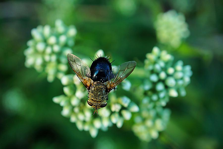 Horsefly Photograph - Horsefly No Bother Me by Beth Akerman