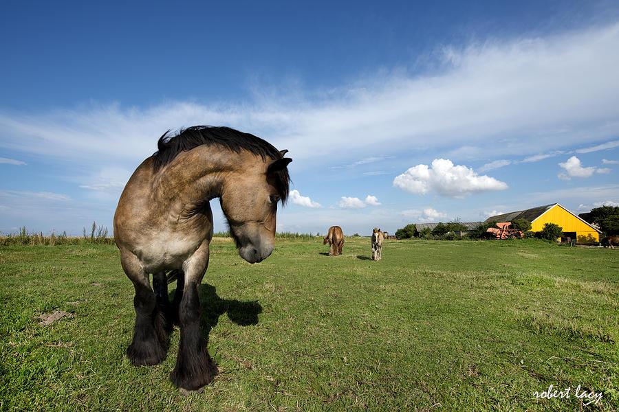 Horse Photograph - Horsepower by Robert Lacy