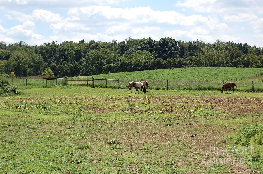 Horses Photograph - Horses At A Distance by Nick