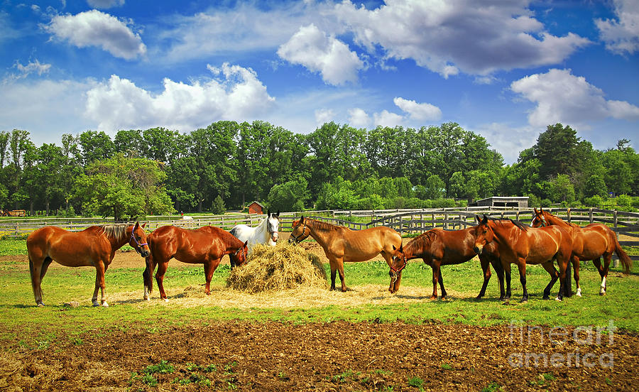 Horse Photograph - Horses At The Ranch by Elena Elisseeva
