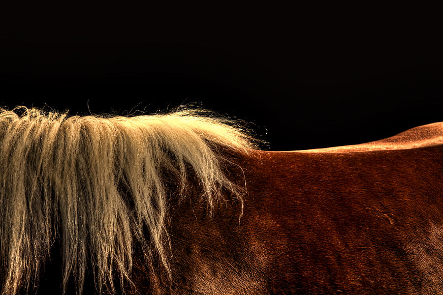 Equine Photograph - Horses Back by Gary Smith
