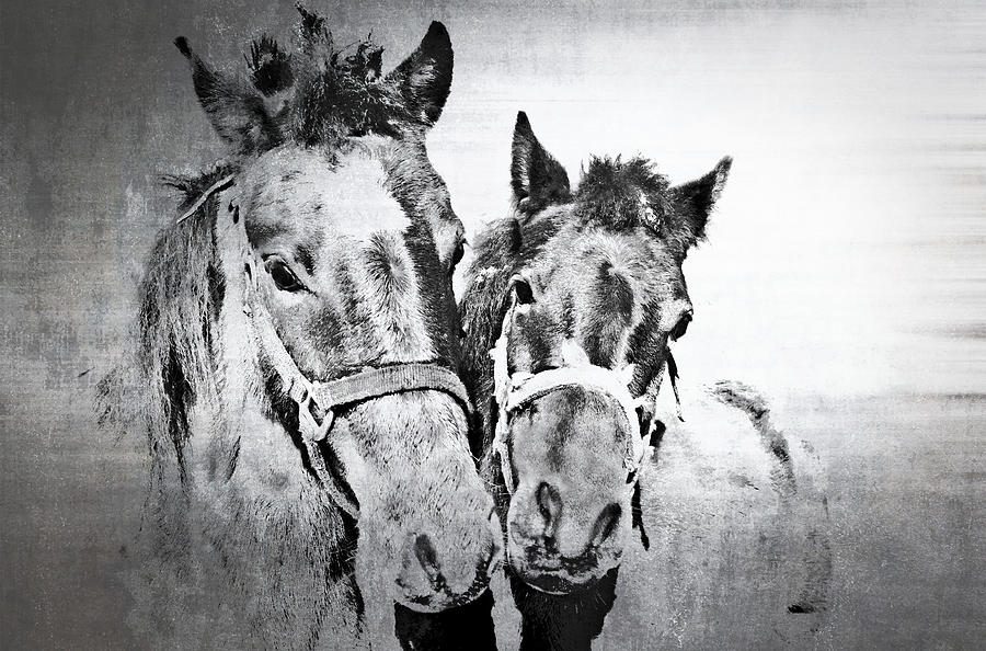 Horses Photograph - Horses By The Road by Kathy Jennings
