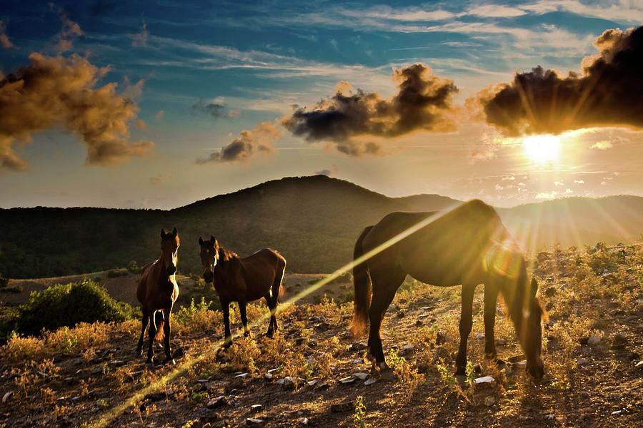 Horizontal Photograph - Horses Grazing At Sunset by Finasteride