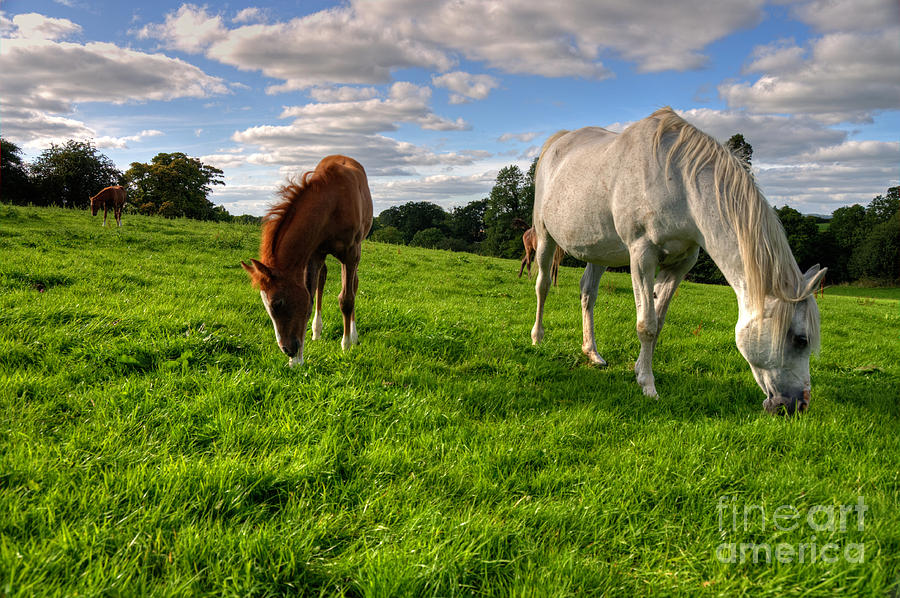 Horse Photograph - Horses Grazing by Rob Hawkins