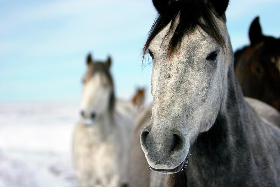 Horizontal Photograph - Horses In The Snow by Lori Andrews