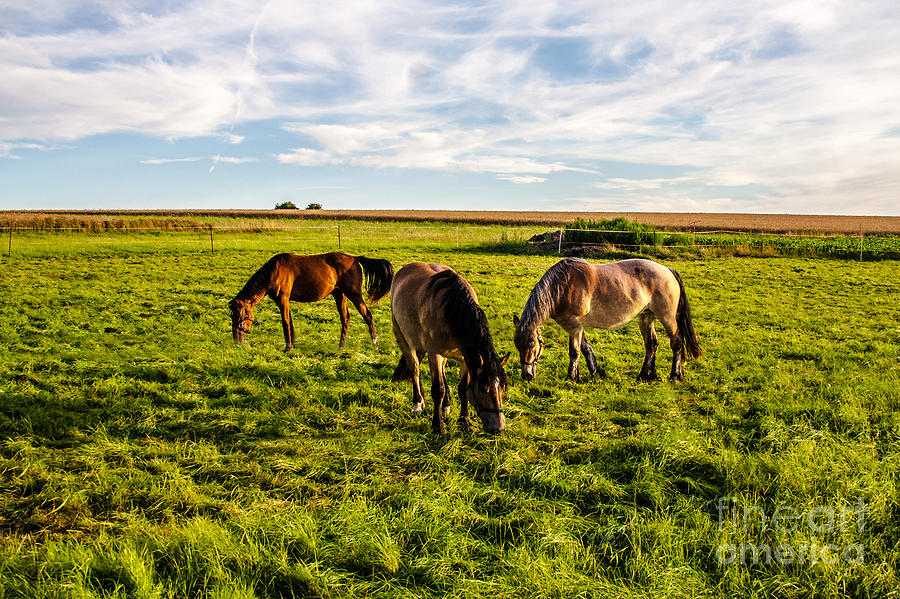 Horses Photograph - Horses In The Sunset by Bodo Herold
