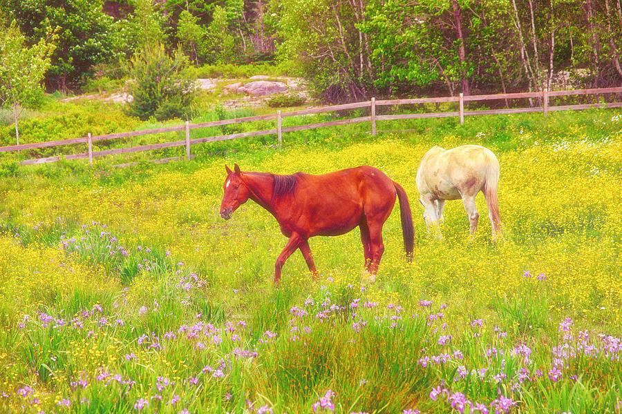 Horses Photograph - Horses Paradise by Karol Livote