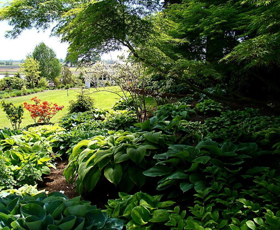 Hosta Photograph - Hosta Garden by Nick Kloepping