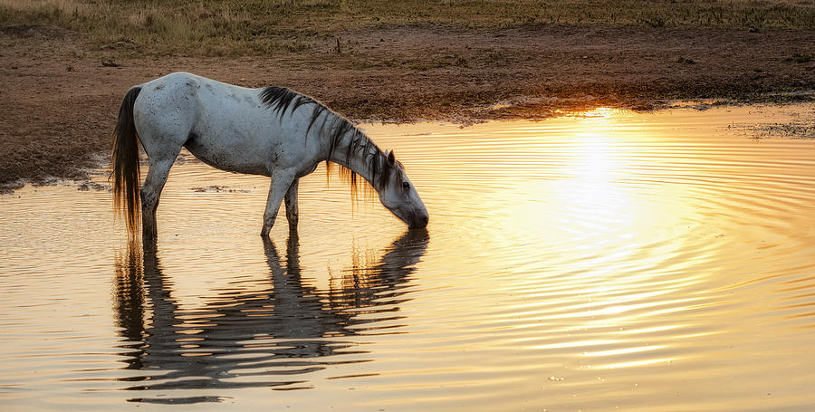 Equine Photograph - Hot Day Ahead by Ron  McGinnis