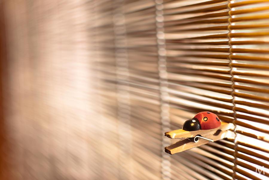 Horizontal Photograph - House Of The Rising Ladybug by Máté Makarész